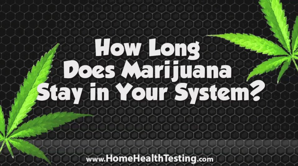 How Long Does Weed Stay in Your System?   THC Test Facts